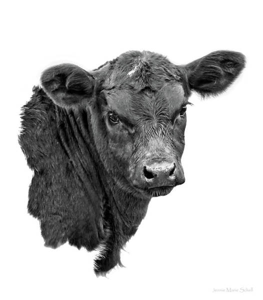 Wall Art - Photograph - Texas Longhorn Calf Black And White by Jennie Marie Schell