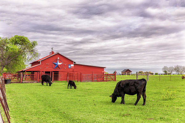 Photograph - Texas Pride In Ellis County by Victor Culpepper