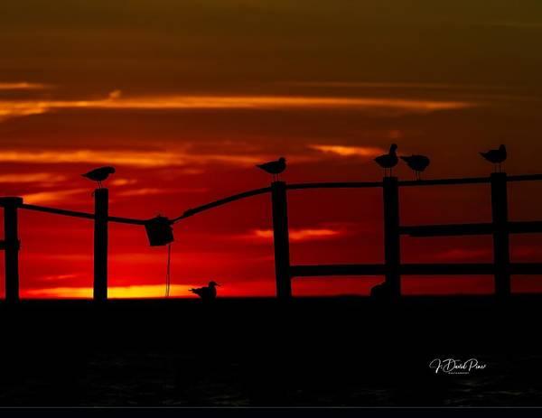 Photograph - Texas Sunrise Silhouette by David Pine