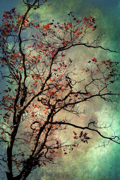 Teal Mixed Media - Textured Oak Tree Art by Christina Rollo