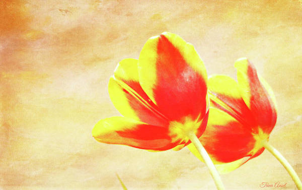 Photograph - Textured Tulips by Trina Ansel
