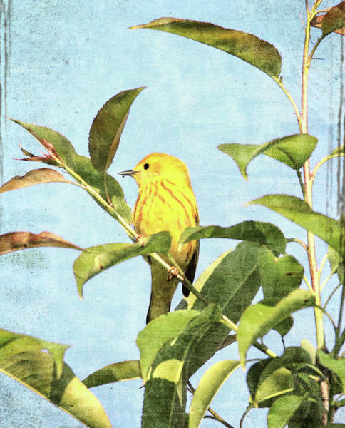 Mixed Media - Textured Yellow Warbler by Dan Sproul