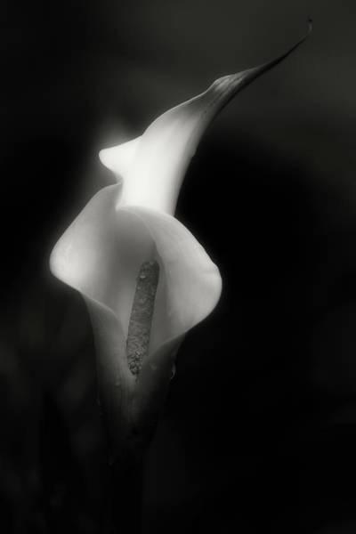 Photograph - Textures by Allin Sorenson
