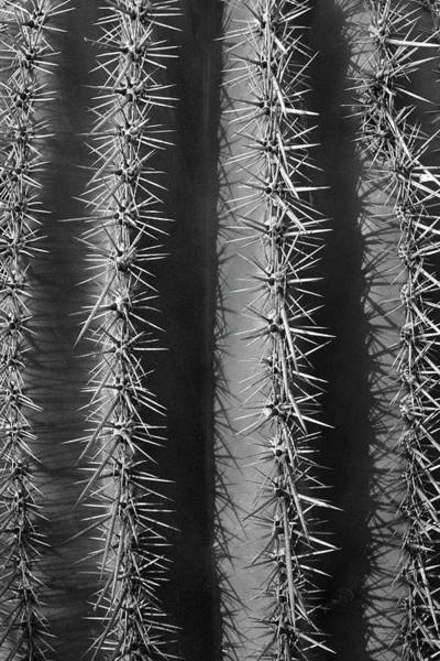 Photograph - Textures Of A Cactus by Chance Kafka