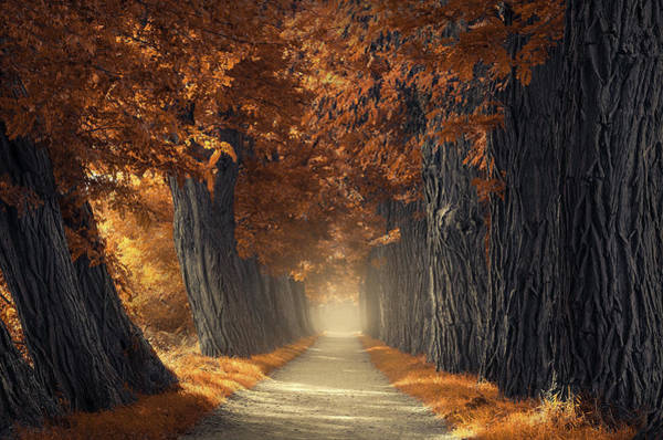Photograph - Textures Of Autumn by Rob Visser