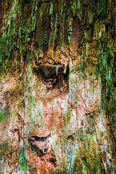 Photograph - Texturized Mossy Tree Trunk by Tikvah's Hope