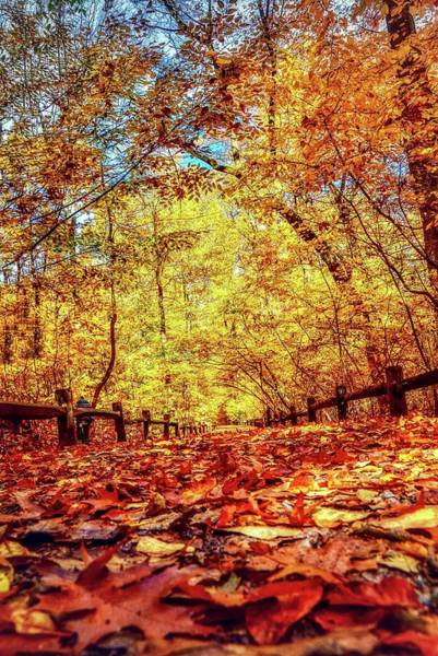 Photograph - Thain Forest by Shannon Kelly