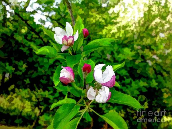 Photograph - Thank You Father For Apple Blossoms by Debra Lynch