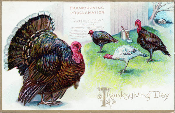 Thanksgiving Digital Art - Thanksgiving Day Turkey by Archive Photos