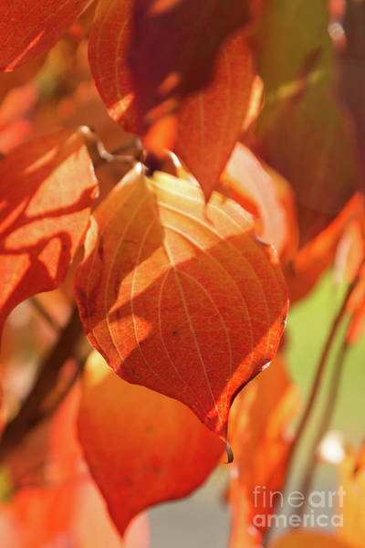 Photograph - That Autumn Light by Ana V Ramirez
