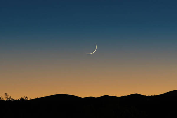 Photograph - That Desert Moon by Davin McLaird
