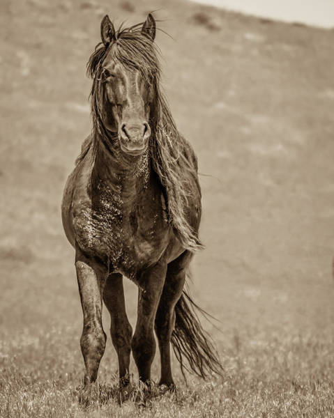 Photograph - That Rugged Look by Mary Hone