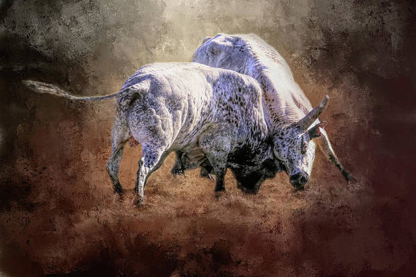 Wall Art - Photograph - That's A Lot Of Bull by Donna Kennedy