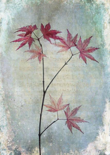 Digital Art - The Acer by Glenys Garnett