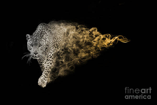 Digital Photograph - The African Leopard Is One Of The Big by Effect Of Darkness