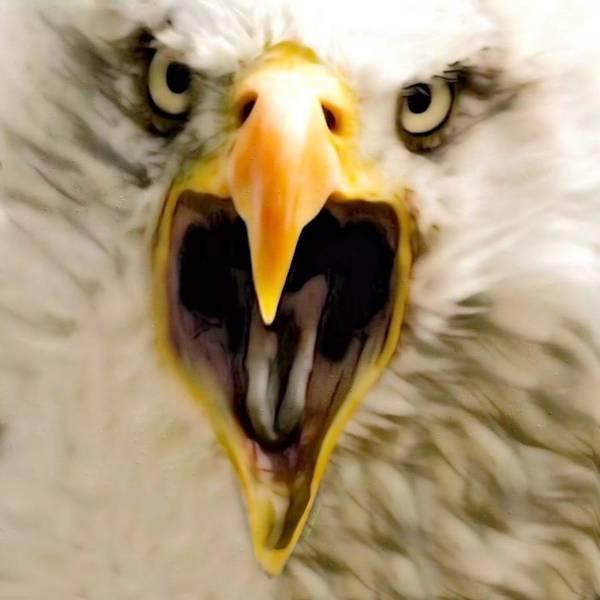Digital Art - The American Screaming Eagle by Scott Wallace Digital Designs