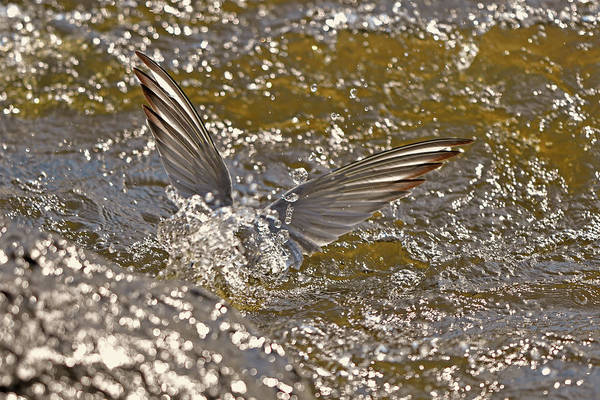 Wall Art - Photograph - The Angel Wings Of The River by Asbed Iskedjian
