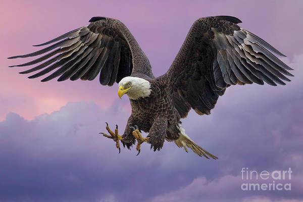 Wall Art - Photograph - The Approach by Dale Erickson