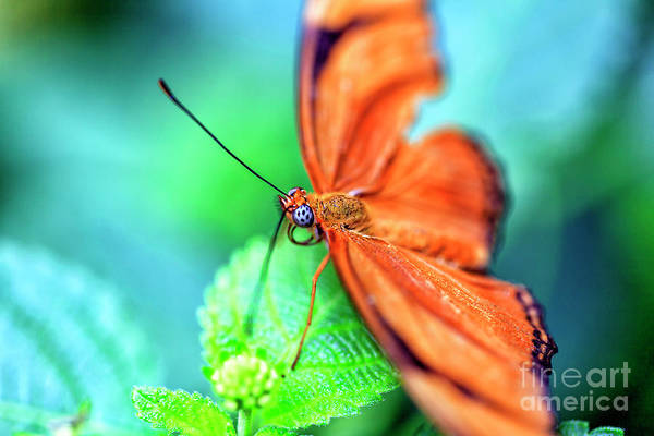 Photograph - The Art Of Butterfly Colors by John Rizzuto
