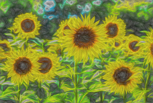 Wall Art - Photograph - The Art Of The Sunflower by David Pyatt