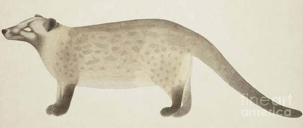 Wall Art - Painting - The Asian Palm Civet  by Indian School