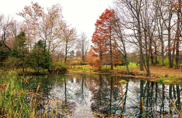 Photograph - The Autumn Pond At Rutgers Gardens by John Rizzuto