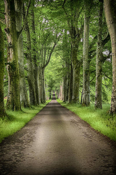 Photograph - The Avenue Of Trees by Alan Campbell