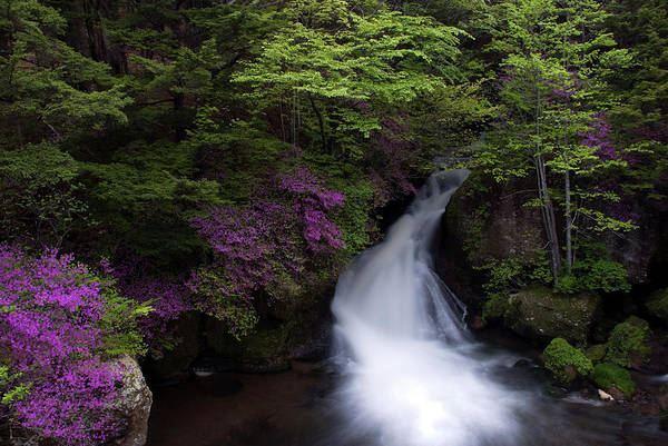 Nikko Photograph - The Azalea Which Blooms To The by All Rights Reserved