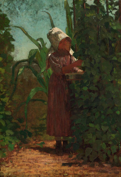 Wall Art - Painting - The Bean Picker, 1876 by Winslow Homer