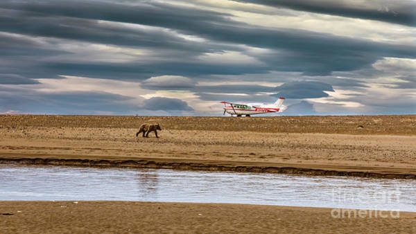 Photograph - The Bear And The Airplane by Lyl Dil Creations