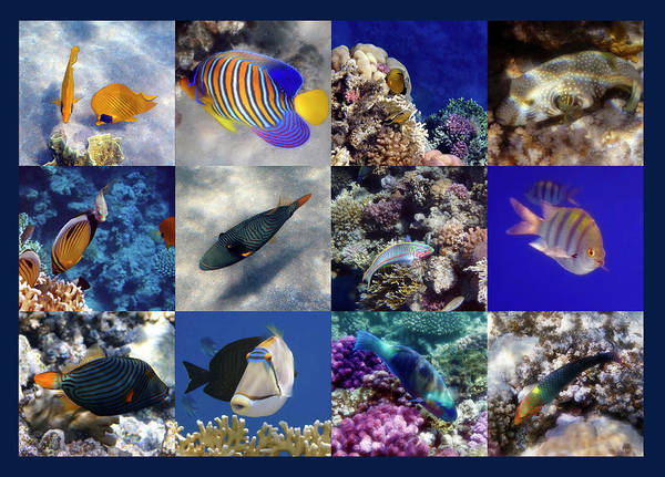 Photograph - The Beautiful And Colorful Red Sea Sealife Collage by Johanna Hurmerinta