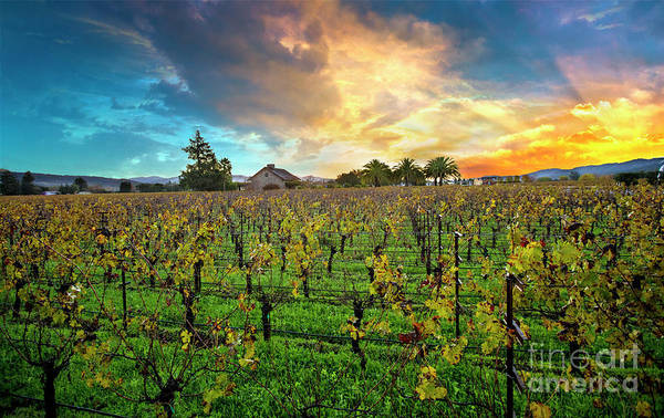 Wall Art - Photograph - The Beauty Of Napa by Jon Neidert