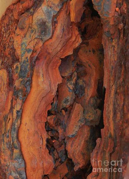 Photograph - The Beauty Of Rust by Marcia Lee Jones