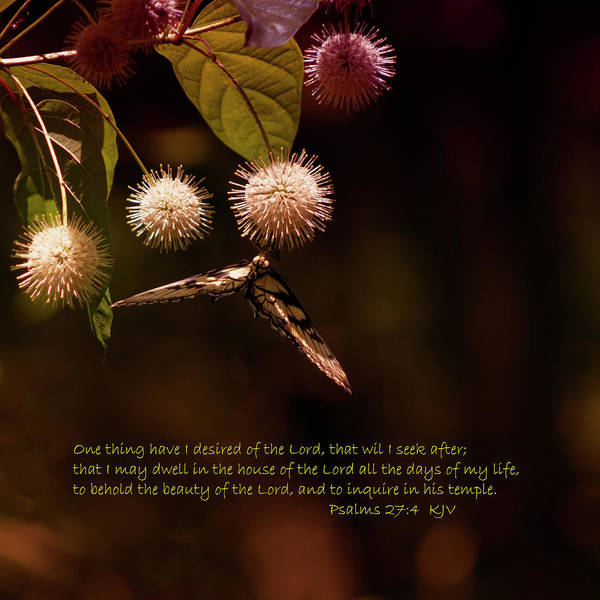 Wall Art - Photograph - The Beauty Of The Lord by Denise Harty