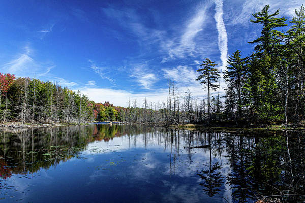 Wall Art - Photograph - The Beaver Pond by Sean Sweeney