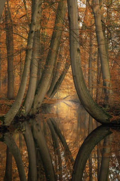 Wall Art - Photograph - The Bent Ones by Martin Podt
