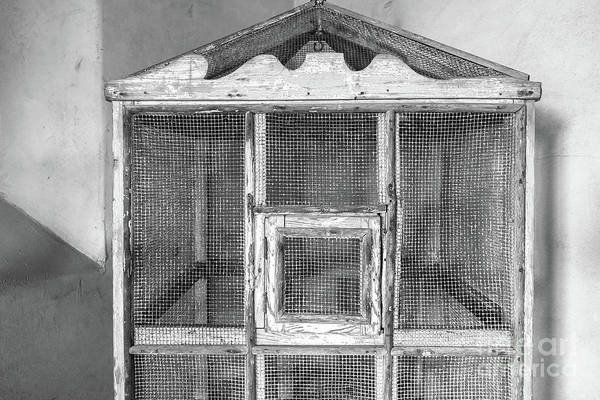 Photograph - The Bird Cage by Edward Fielding
