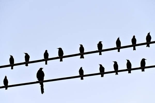 Texas A Photograph - The Birds by Larry Gerbrandt