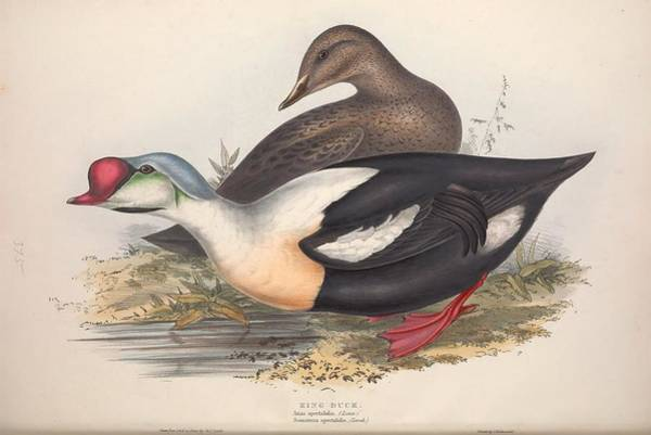 Wall Art - Painting - The Birds Of Europe, London,printed By R. And J.e. Taylor, Pub. By The Author,1837 - 160 by Celestial Images