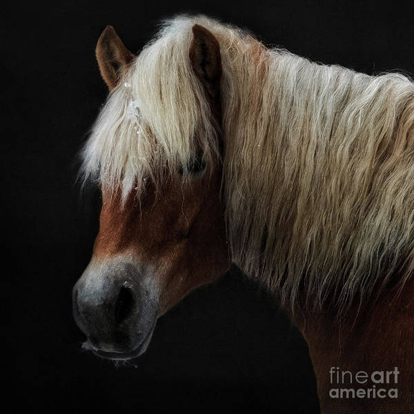 Wall Art - Photograph - The Blond Beau  by Flo Photography