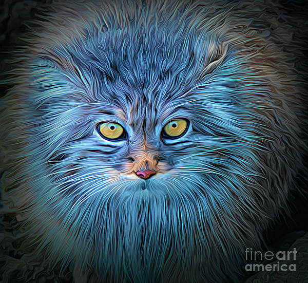 Photograph - The Blue Cat by Brian Tarr