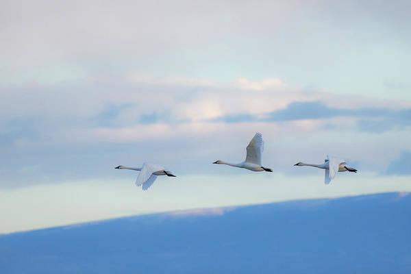 Wall Art - Photograph - The Blue Hour by Sandy Sisti