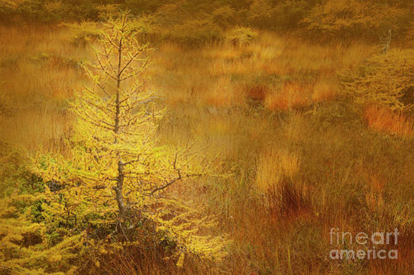 Photograph - The Bog by Scott Kemper