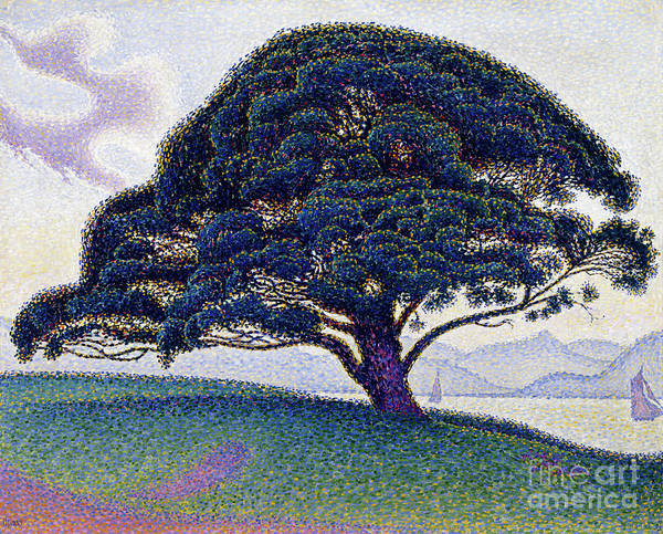 Wall Art - Painting - The Bonaventure Pine, 1893 by Paul Signac