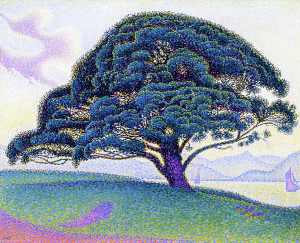 Neo-impressionism Wall Art - Painting - The Bonaventure Pine - Digital Remastered Edition by Paul Signac
