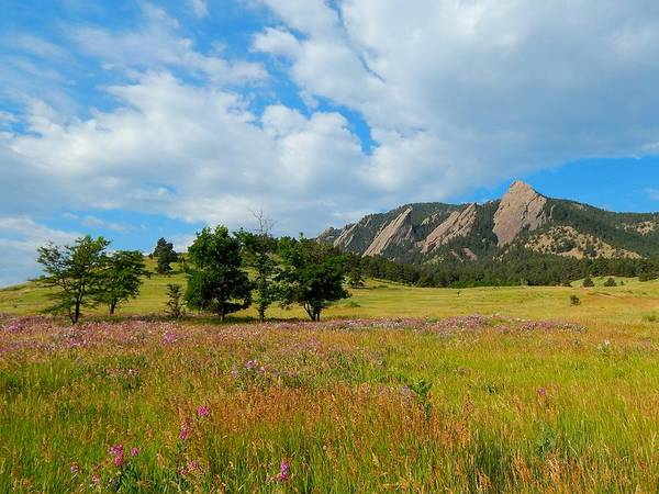 Drawing - The Boulder Flatirons by Dan Miller