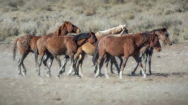 Photograph - The Boys In The Band, No. 1 by Belinda Greb