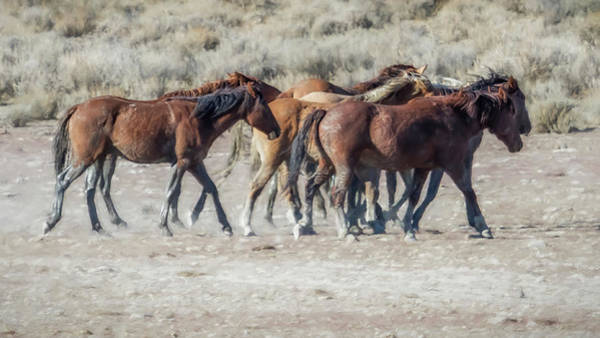 Photograph - The Boys In The Band, No. 2 by Belinda Greb