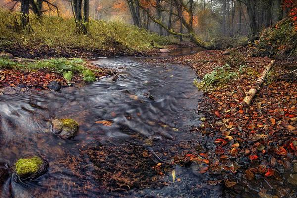 Photograph - The Breath Of Autumn by Vlad Sokolovsky