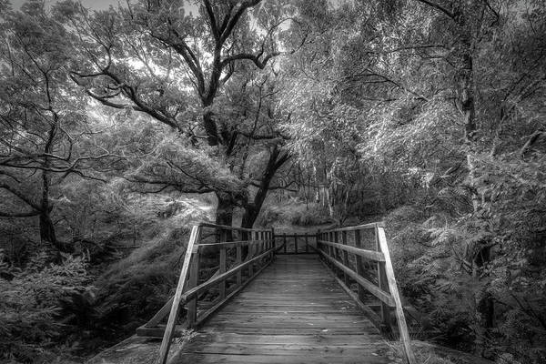 Photograph - The Bridge To Ben Nevis In Black And White  by Debra and Dave Vanderlaan
